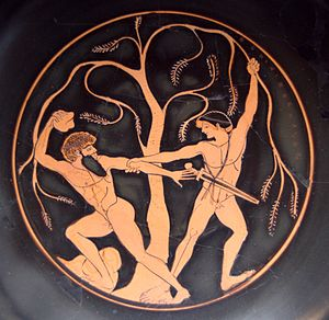 Sinis (mythology) - Theseus and Sinis, Attic red-figure kylix, 490–480 BC, Staatliche Antikensammlungen (Inv. 8771).