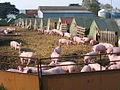 Thorpe Bassett - Piglets - geograph.org.uk - 166495.jpg