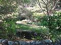 Tilden botanical garden 2.JPG