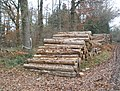 Timber stack, Coombland Wood - geograph.org.uk - 1065582.jpg