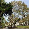 Topkapı Palace Garden - panoramio.jpg