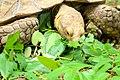Tortoise feeding.jpg