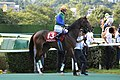 Tosen-victory Rose-Stakes 2015.jpg