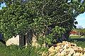 Tout-y-Faut FR21 chapelle IMF2539.jpg