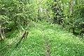 Track near Coalburn cottage - geograph.org.uk - 834624.jpg