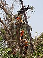 Tree Cutting after Cyclone Fani Electricity.jpg