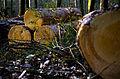 Tree Nature.jpg