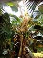 Tree at Cms.jpg