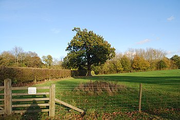 English: Tree by the path south of Fairlawne House