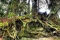 Trees Capilano Park Vancouver British Columbia Canada 11.jpg