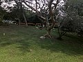 Trees and Grass in National Tsing Hua University.jpg