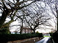 Trees and House at the start of Ivy Lane - geograph.org.uk - 639343.jpg