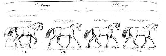 photo cheval trot