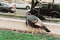 TurkeyMirror.jpg