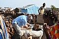 U.S., Djiboutian veterinarians partner to treat local livestock.jpg