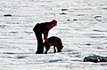 US Navy 040808-N-0331L-004 Betty Ski is led by cadaver dog, Riccor during the recovery of a Navy P-2V Neptune aircraft that crashed over Greenland in 1962.jpg