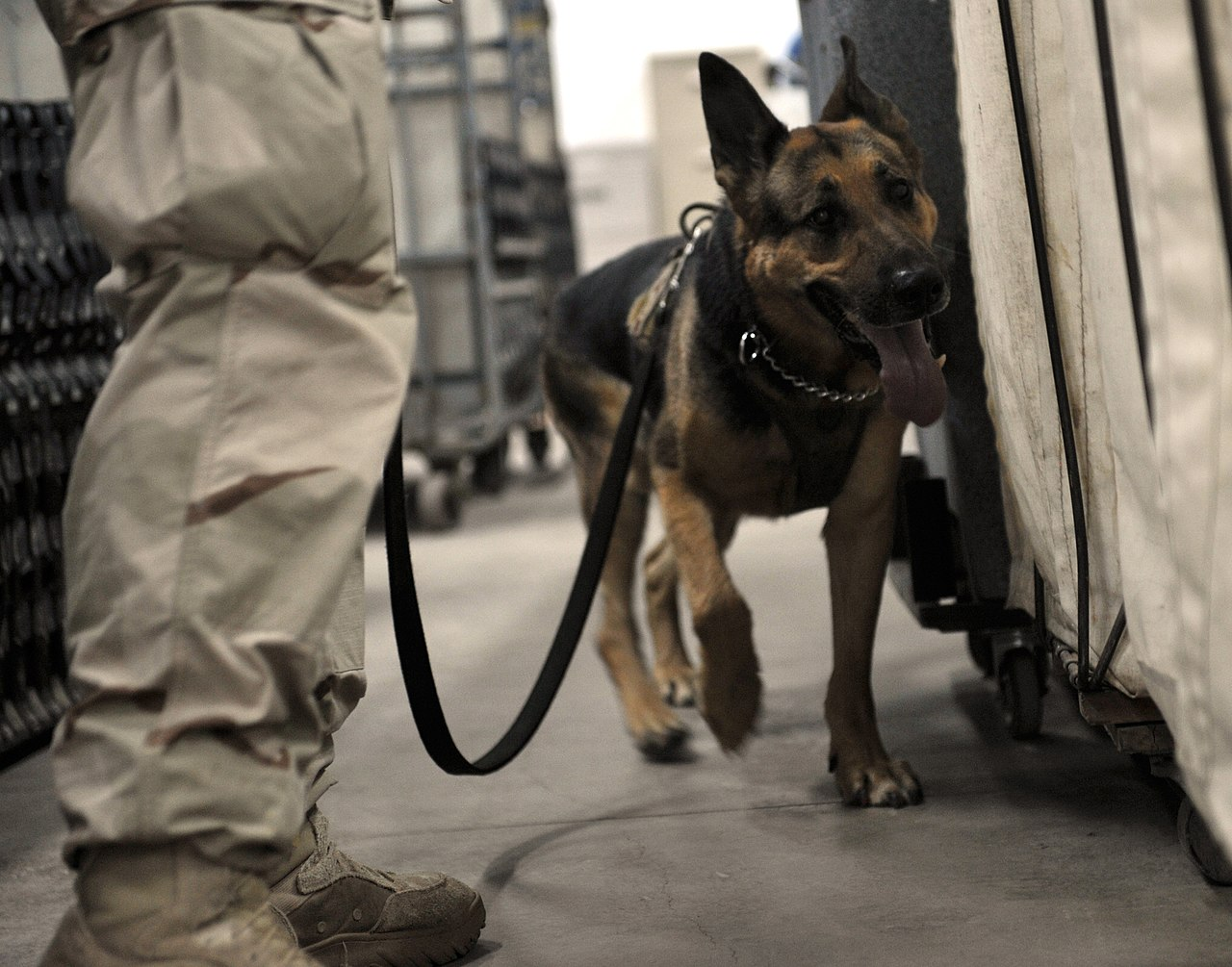 Image Result For Guard Dog Training