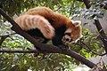 Ueno zoo, Tokyo, Japan (5895917229).jpg