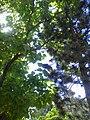 Under trees. July 2013. - Под кронами деревьев. Июль 2013. - panoramio.jpg