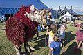Underneath the Stars Festival, Cannon Hall Farm, Cawthorne (20055140776).jpg