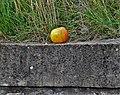 Une pomme sur un mur.jpg