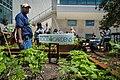 United Nations Food Garden Opening 2.jpg