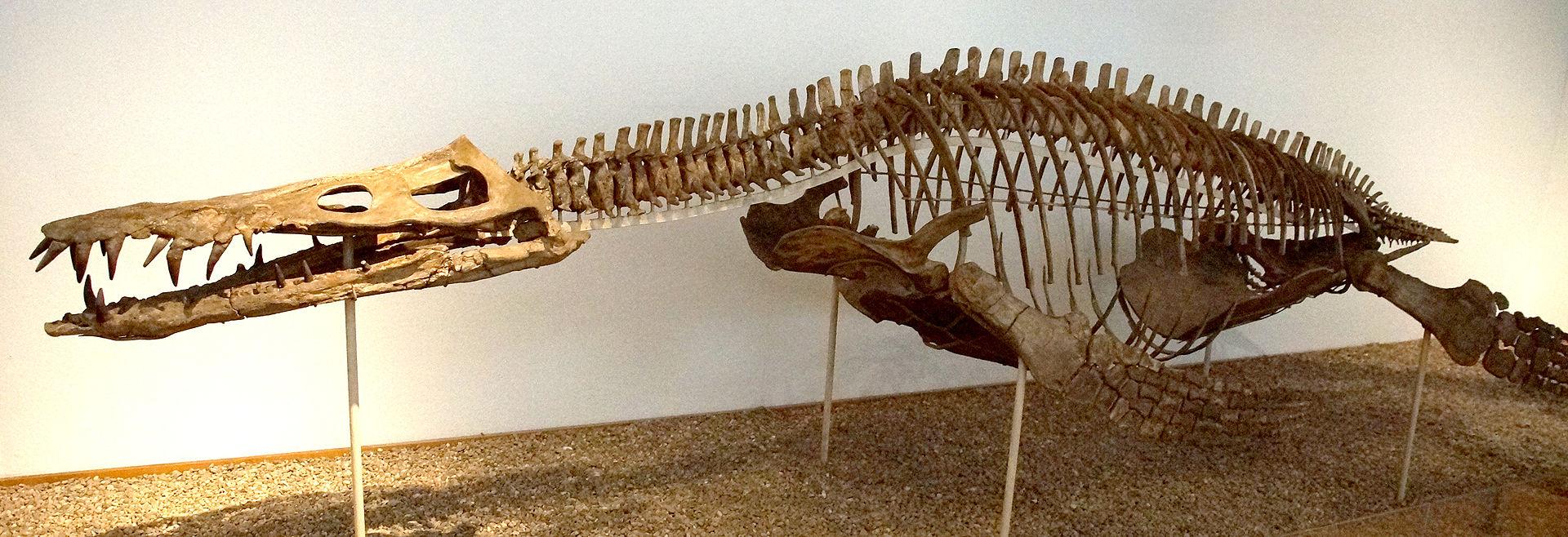 Scheletro completo di Pliosaur Lipleurodon ferox