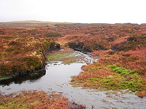 Ecosystem services - Upland bog in Wales, forming the official source of the River Severn. Healthy bogs sequester carbon, hold back water thereby reducing flood risk, and supply cleaner water than degraded habitats do.