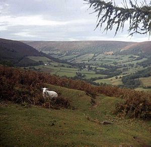 Vale of Ewyas - View up the Vale of Ewyas  (Photo by Trevor Rickard)