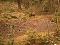 Vattakanal bison.jpg