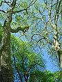 Vaux le Vicomte (1343424676).jpg