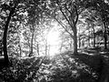 Vejlø skov - panoramio (2).jpg