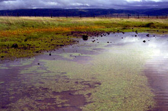 Vernal pool - Vernal pool with clay hardpan bottom, Vina Plains Nature Conservancy Preserve, Calif.