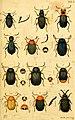 Verzeichniss meiner Insecten-Sammlung (Tab. I) (5998531385).jpg