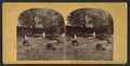 View of grounds at Newport, Herkimer Co., N. Y., from Robert N. Dennis collection of stereoscopic views.png