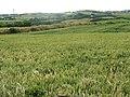 View westwards across farmland in the direction of Llannerch-y-medd - geograph.org.uk - 1399499.jpg