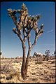 Views at Joshua Tree National Park, California (25ebe883-8455-413c-9189-53a88203ee84).jpg