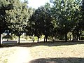 Villa Gordiani 01.JPG