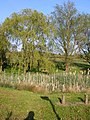 Village duck pond - geograph.org.uk - 416978.jpg