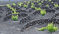 Vineyards - Yaiza - 07.jpg