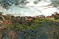 Water's Edge (2741333494).jpg