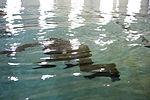Water Survival Training Exercise 141208-M-OB177-048.jpg