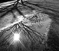 Water reflection - Flickr - hokkey.jpg