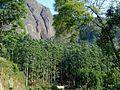 Way 2 Munnar - panoramio (1).jpg