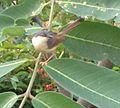Weaver bird at play.jpg