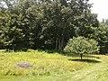 Weir Farm National Historic Site - trees.jpg