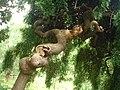 Weird tree (4511809846).jpg