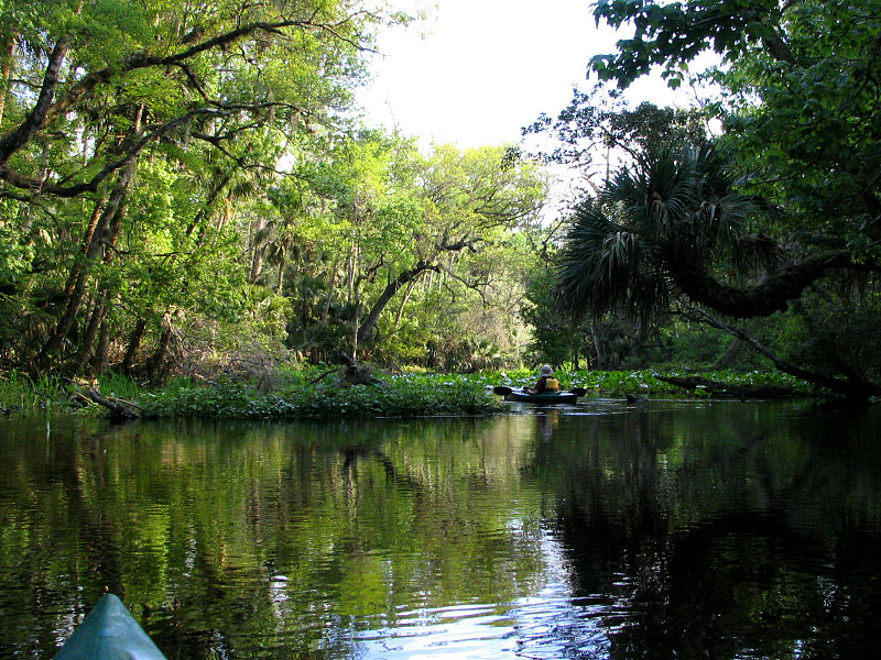 Exploring waterways and springs in Orlando