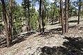 West of Burnt Cabin Flat - Flickr - aspidoscelis.jpg