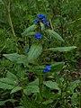Whf blue 06.jpg